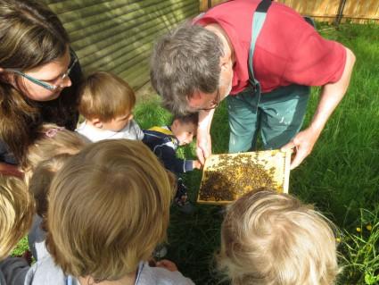 Herr Römer zeigt uns die Waben mit den Bienen