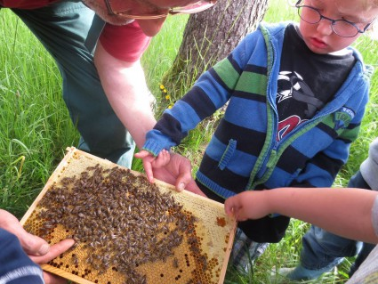 Beim füttern der Bienen